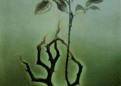La rosa, 1966, olio su tavola 24x54 cm